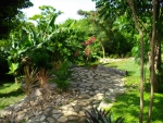 Pathway through the tropical garden