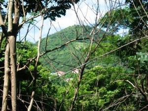 Mount Desire 3
