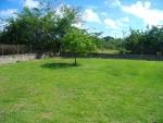 Garden at rear of house