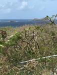 View to Mabouya and Sandy Island